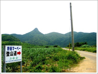 石垣島 ドライブ