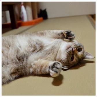新玉旅館 猫